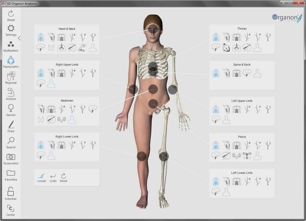 3D Organon Anatomy绿色版