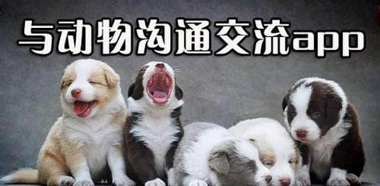 动物翻译器